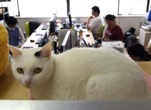 Cats in the workplace can help lower employees' stress levels.