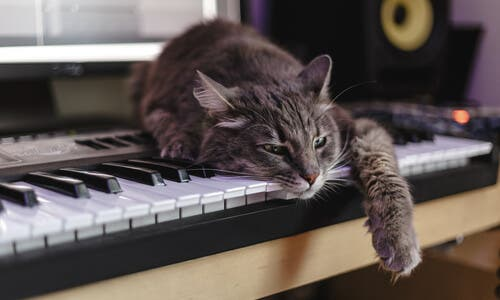 A cat resting on top of a keyboard and with the radio on.