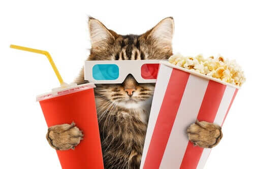 A cat at the movies.