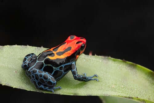 A frog with colorful skin.