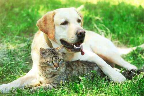 The Treatment of Diabetes in Cats and Dogs