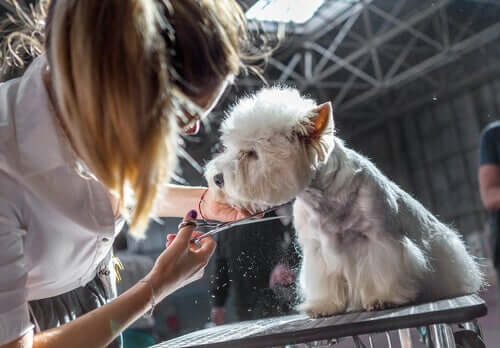 A dog getting a haircut at a pet expo.