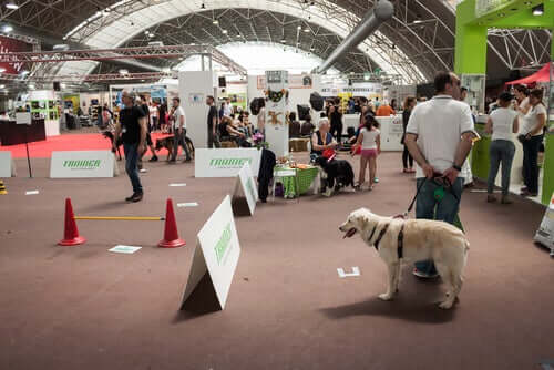 Tips for Taking Your Dog to a Pet Expo