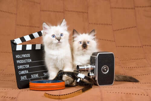 Kittens with filming equipment.