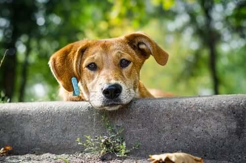 A mixed-breed dog.