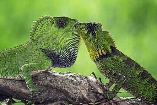 Animals that Mate for Life