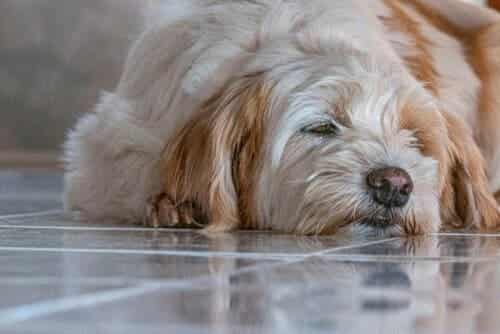 Muscle Spasms in Dogs: What to Do?