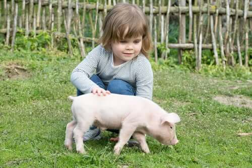 Everything You Need to Know About Having a Pig as a Pet