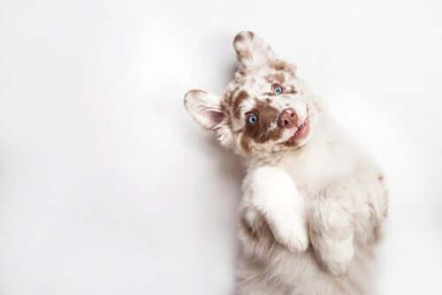 A cute puppy.