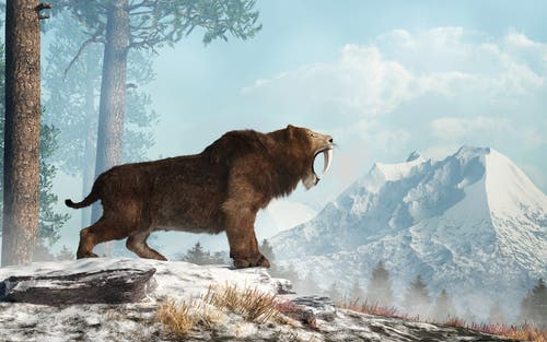 A recreation painting of the saber-toothed tiger in the wild.