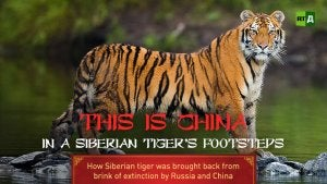 A documentary about the Siberian Tiger.