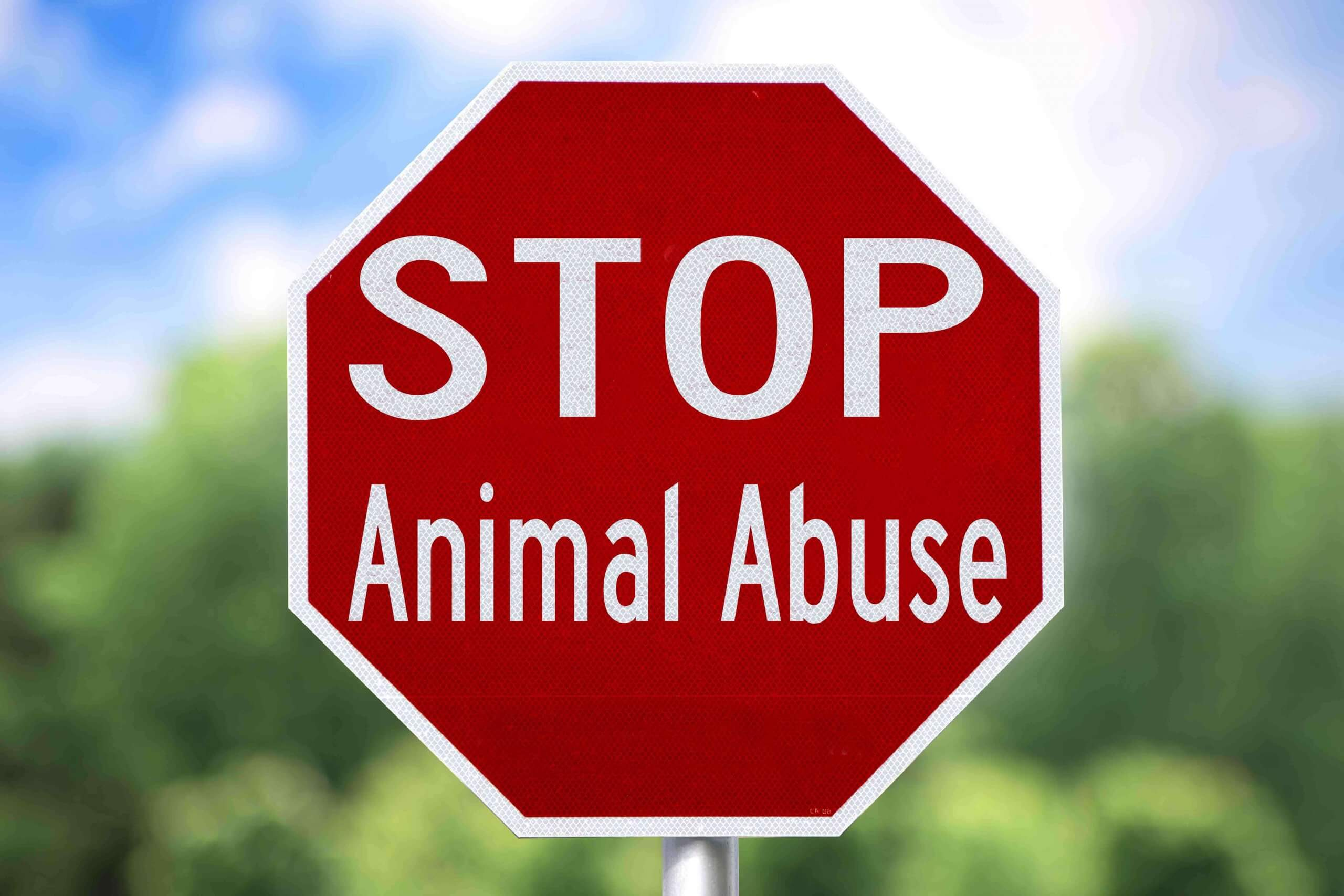 "A ""stop animal abuse"" sign."