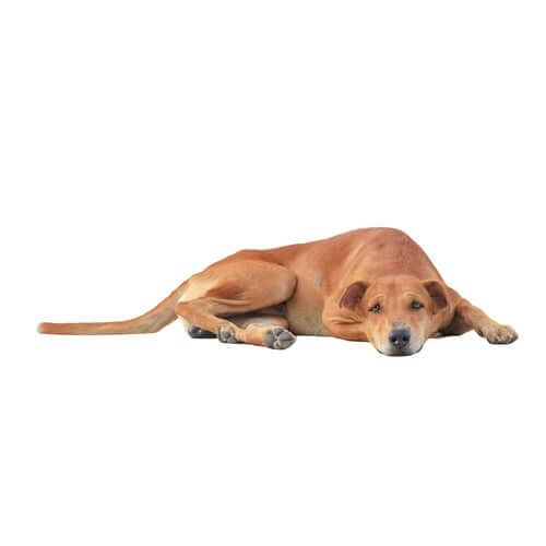 A dog laying down.