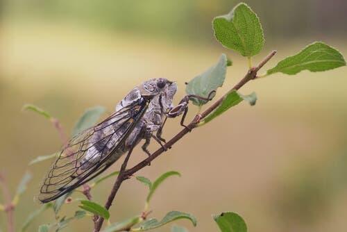 A cicada on a twig.