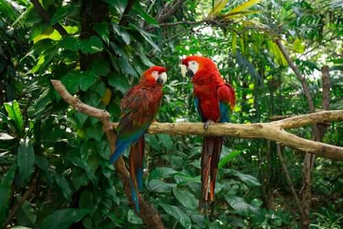A pair of macaws.