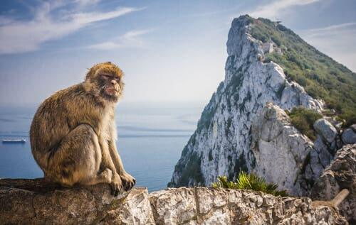 Barbary Macaque - Characteristics and Habitat