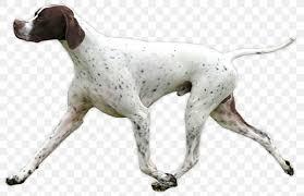 A dog walking.