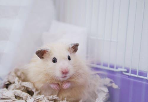 5 Species of Hamster