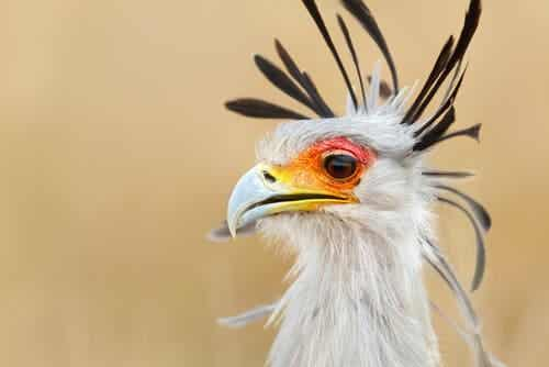 The Amazing World of Birds of Prey