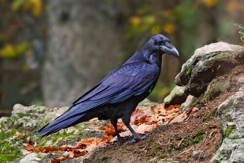 Meet 10 Interesting Carrion-Eating Animals