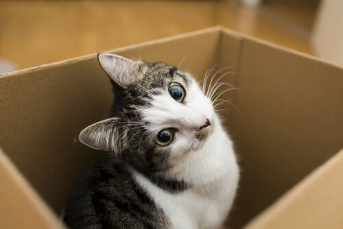 There are some important steps to help your cat adapt to a new home.