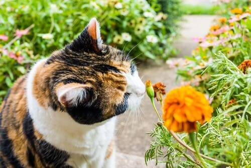 A cat with a plant.