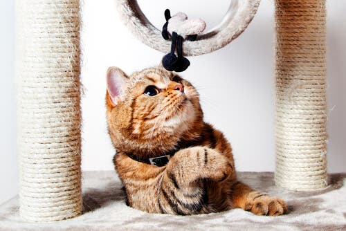 A cat playing with a toy and scratching post.
