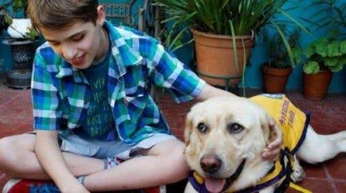 A guide dog with a young boy.