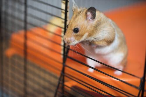 How to Improve Your Hamster's Cage