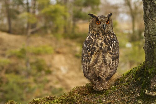 An owl sitting on the ground.