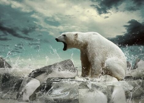 A polar bear with its mouth open on a block of ice.