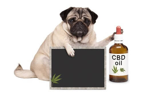 Alternative Medicine for Pets