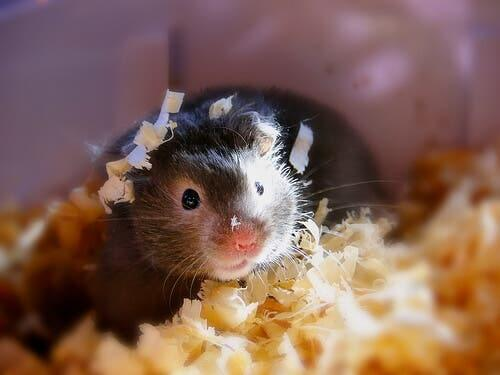 Bedding for Rodent Cages
