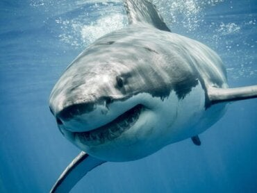The Animals with the Strongest Jaws