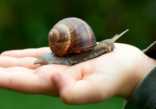Snail Farming: Learn About Heliciculture