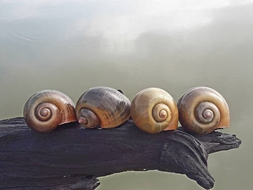 A picture of lined-up snails.
