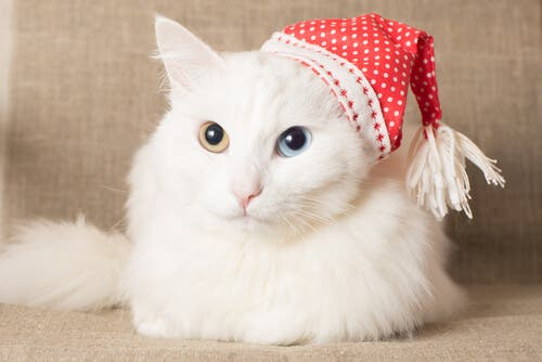 Seven Cat Breeds with Thick Luscious Fur