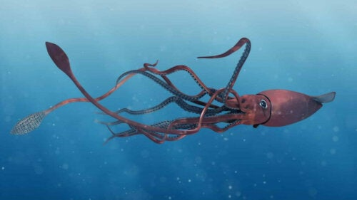 Are Giant Squids a Myth?