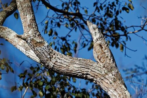 A tree with camouflaged animals.