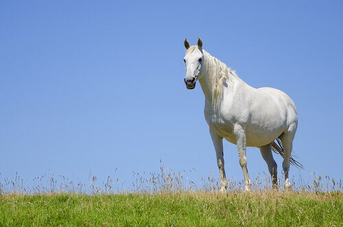A Pregnant Mare: What You Need to Know