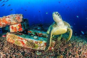 Turtles as a Cultural Symbol