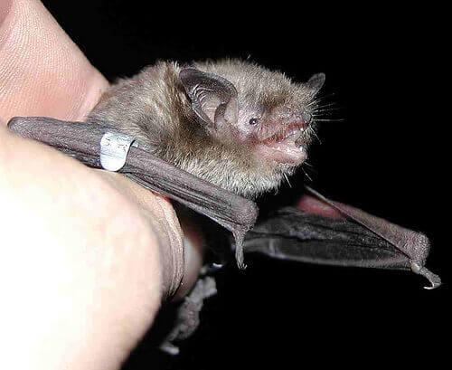 A bat.