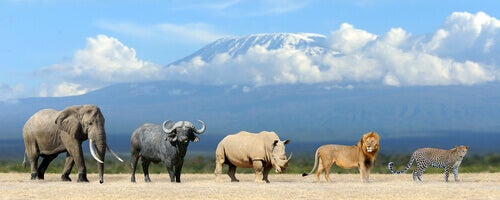 Five animals from Africa.