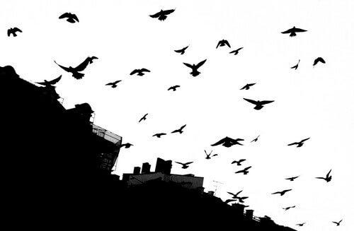 A film noir photo of some birds.