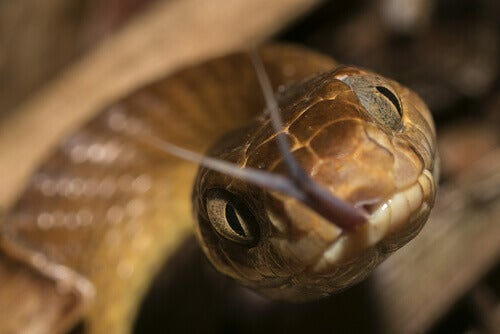 Brown tree snakes are one of the many species with harmful habits.