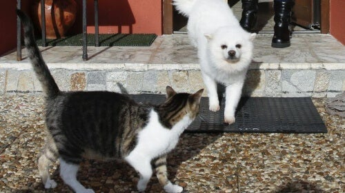 A cat meeting a dog.
