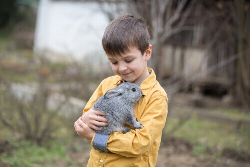 A young boy playing with a rabbit.