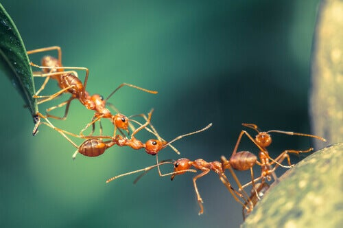 Crazy ants are one of many species with harmful habits.