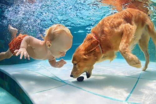 A dog in a pool with a baby.