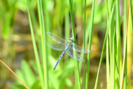 A dragonfly in the grass.